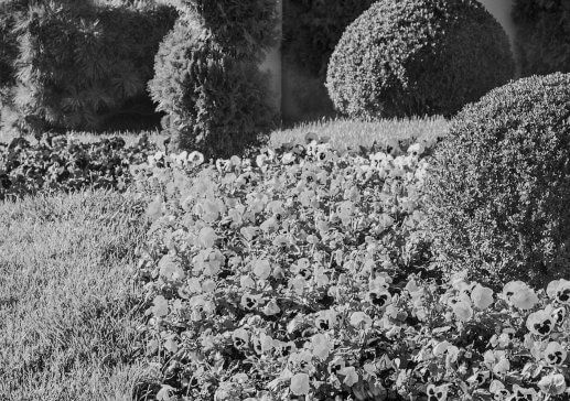 portrait of garden in a grayscale